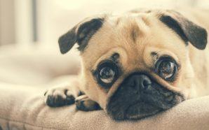 Dlaczego warto dbać o sterylizację lub kastrację zwierząt?